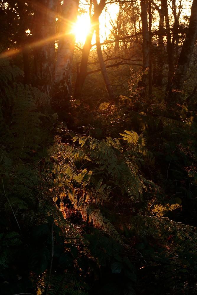 Woodland 2 by Julian Lass