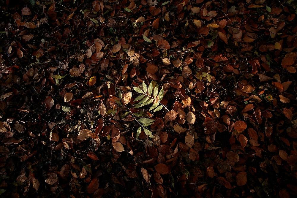 Woodland 3 by Julian Lass