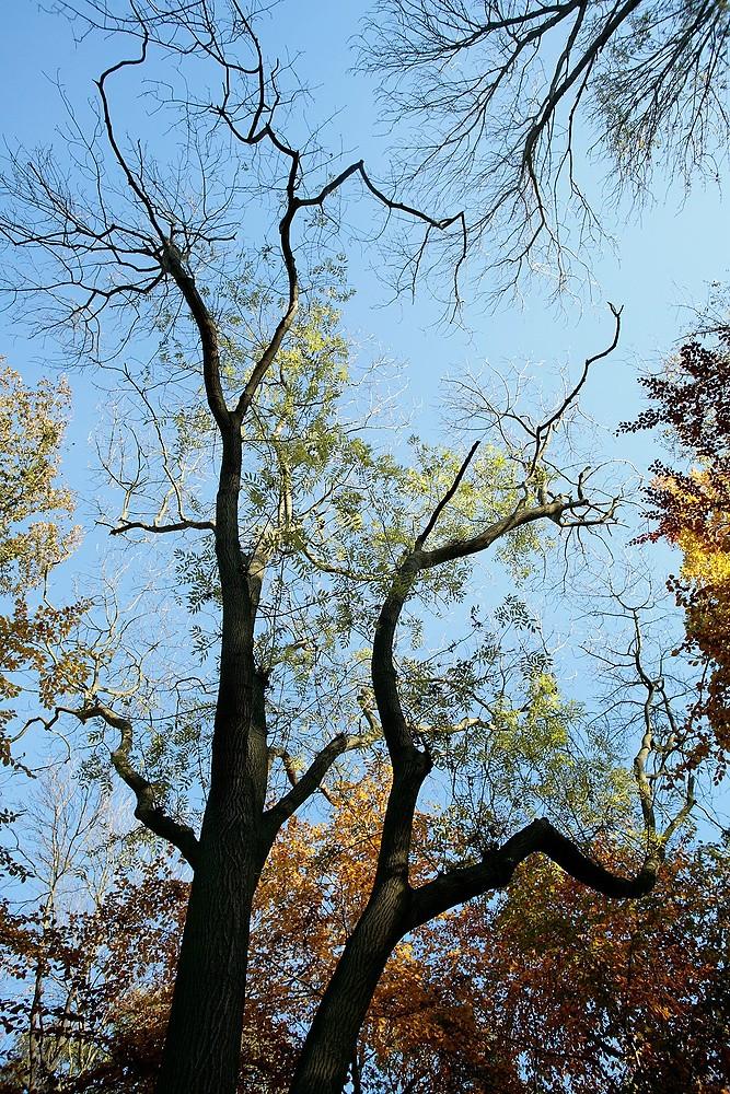 Woodland by Julian Lass
