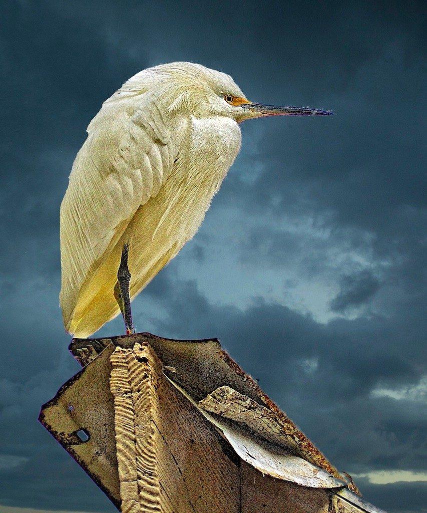 Sandy Scott Wildlife Photography 10