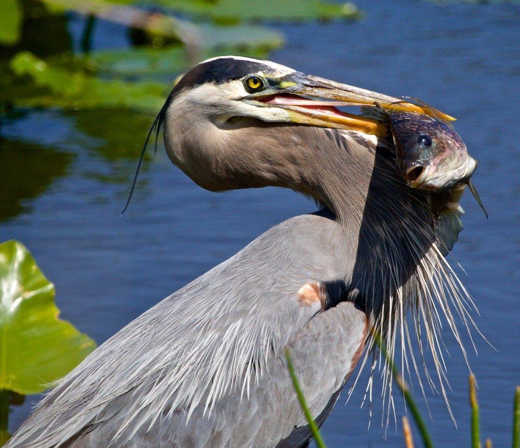 Sandy Scott Wildlife Photography 12