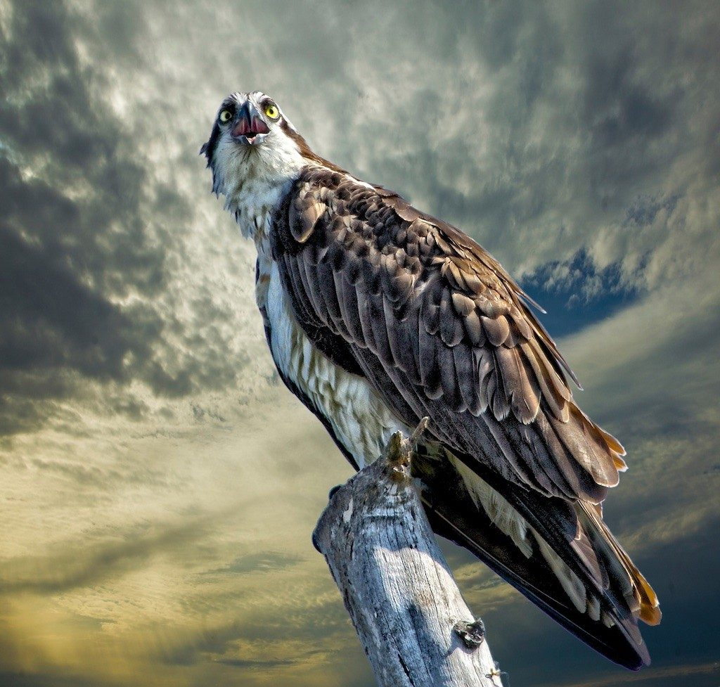 Sandy Scott Wildlife Photography 6