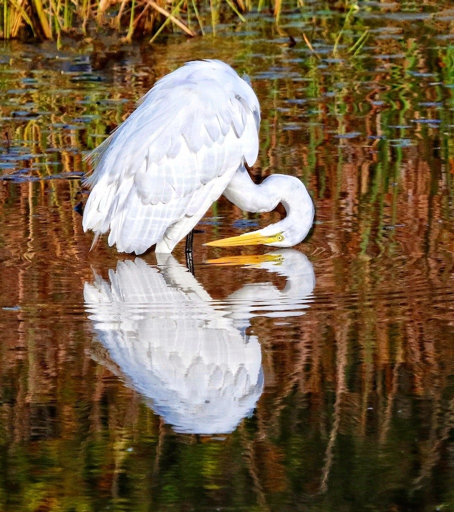 Sandy Scott Wildlife Photography 8