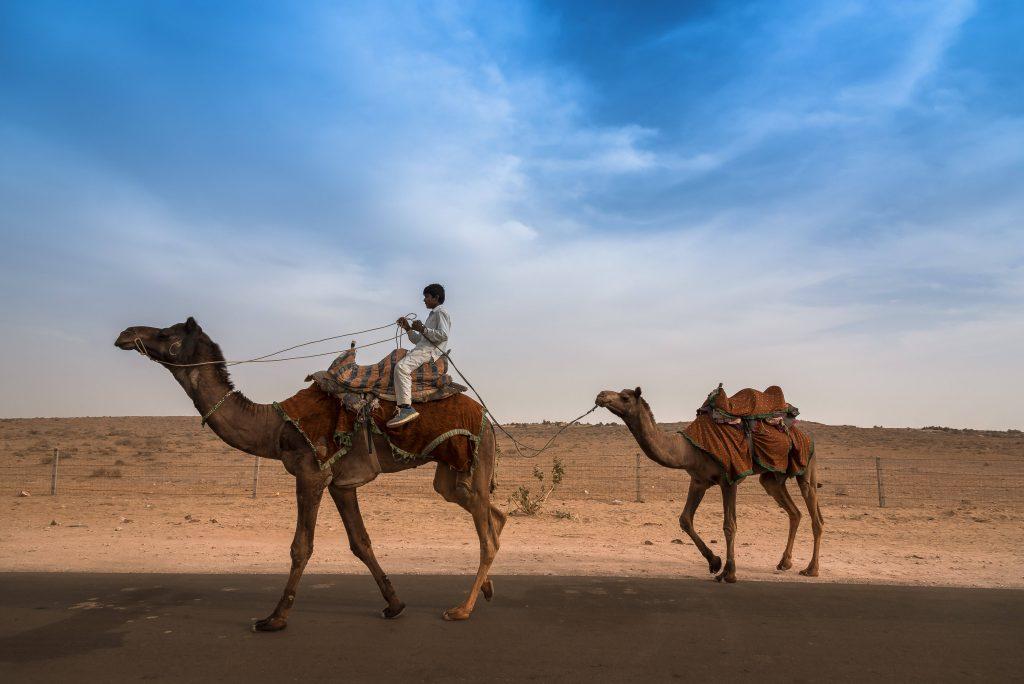 Kannan Muthuraman, Camel, Jaisalmer, India.