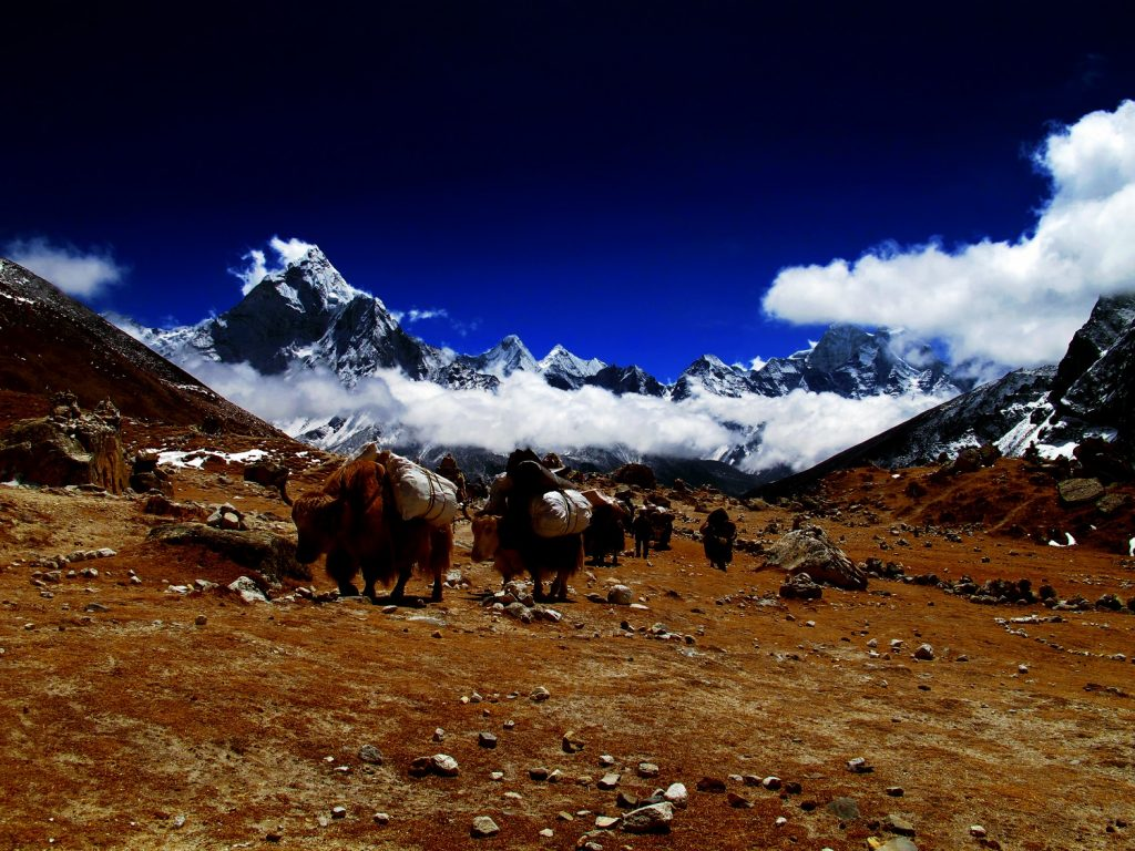Faramarz Zareian, Migration, Base Camp Himalayas.