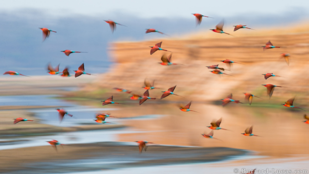 A blurry photograph of Carmine Birds taken by Will Burrard Lucas