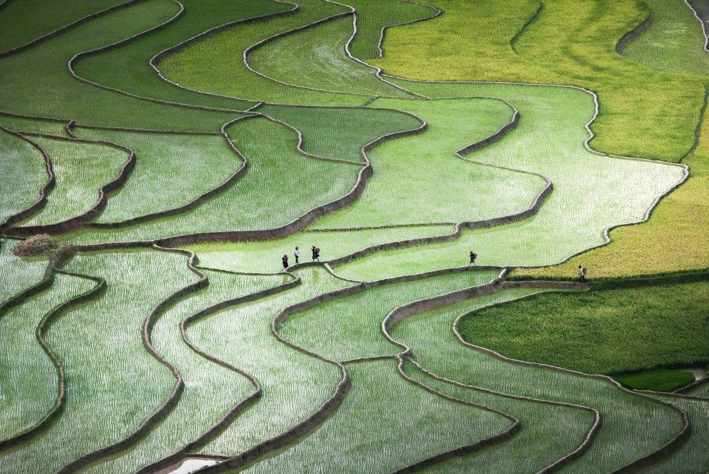 Quynh Anh Nguyen terrace-paddies-in-north-vietnam