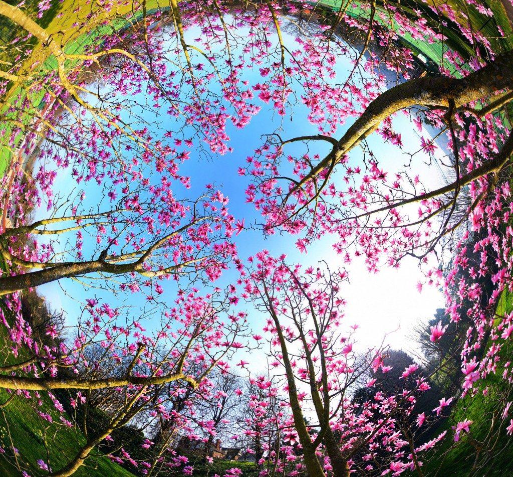 Spring by Richard Sheppard