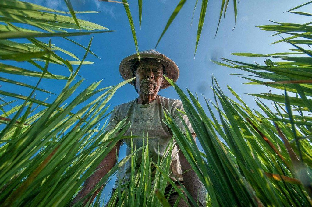 Bambang_Wirawan_Farmer