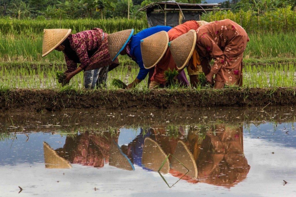 Erfani_Goran_-In-rice-field