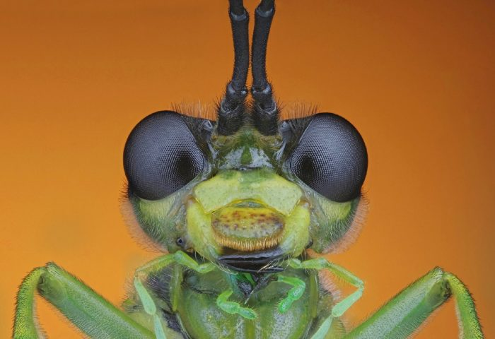sawfly by johan ingles le nobel holmbury england